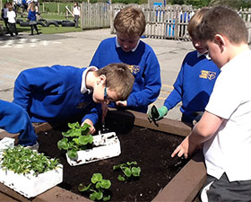 A photo of children planting plants